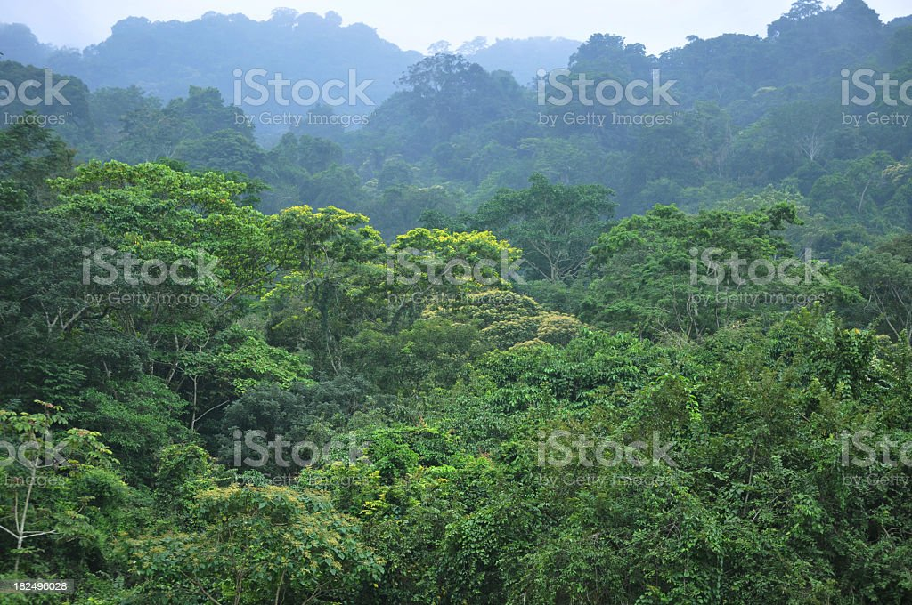 Photograph of an aerial view of a rainforest canopy royalty-free stock photo