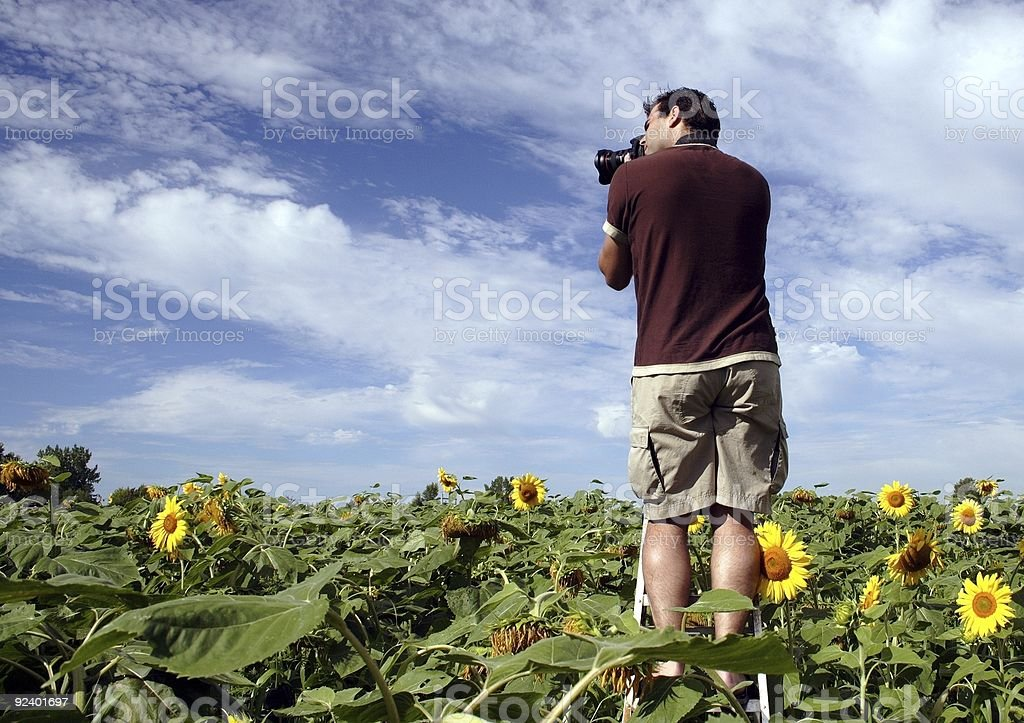 Photographer in a field of sunflower royalty-free stock photo