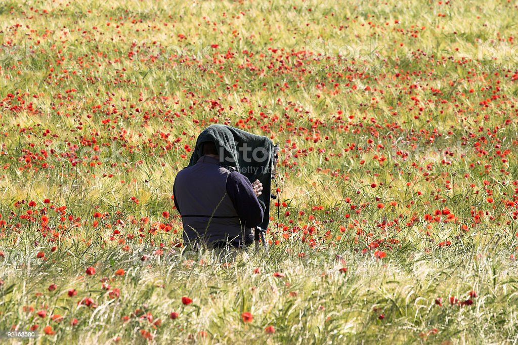 Photographer in a field royalty-free stock photo