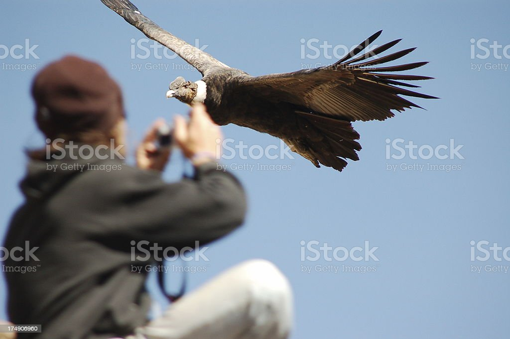 Photographer in front of a condor stock photo