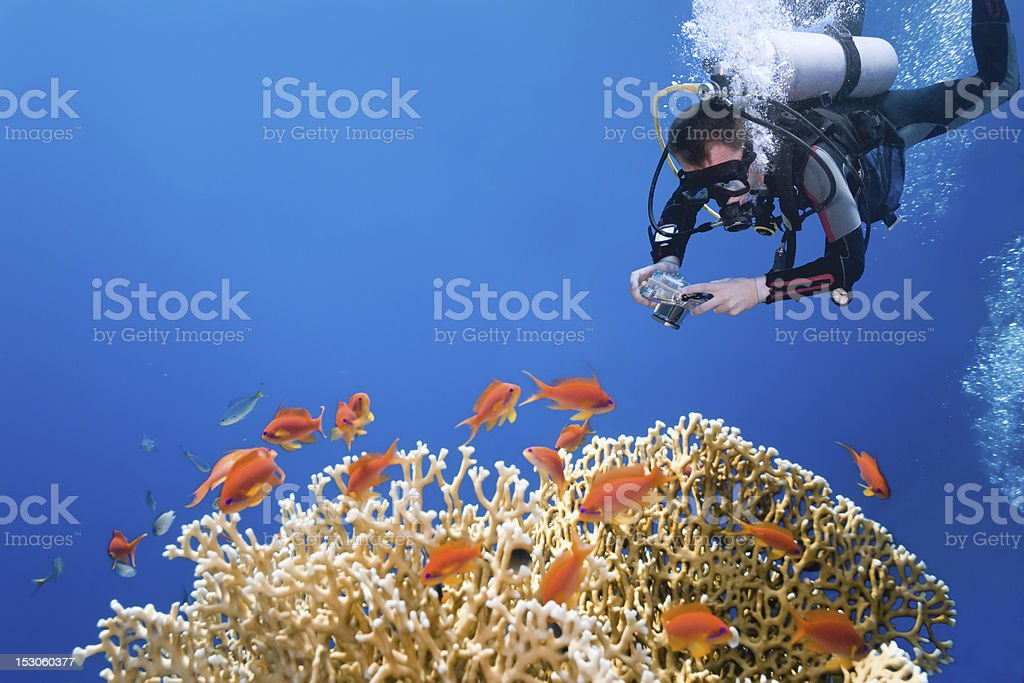 Photographer on the fire coral stock photo