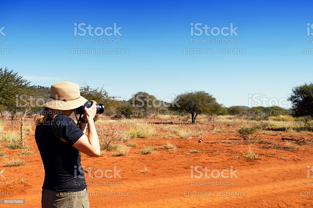 Photographer taking pictures with Nikon camera , Madikwe, South Africa stock photo