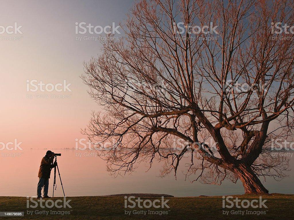 Photographer & Tree royalty-free stock photo