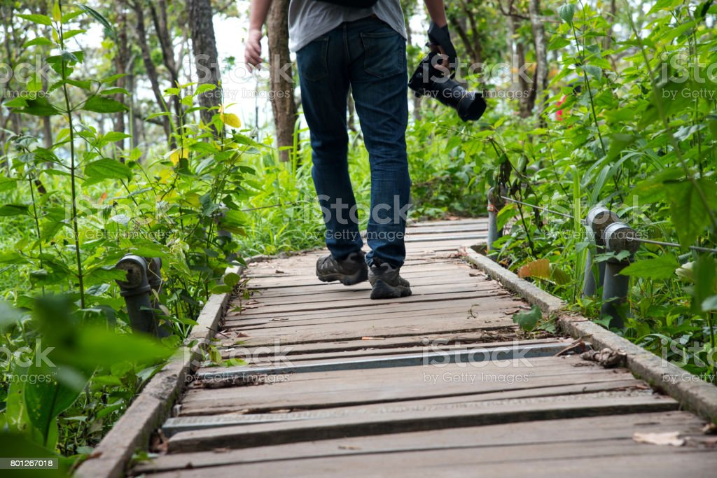 A photographer walking on walkway path into forest stock photo