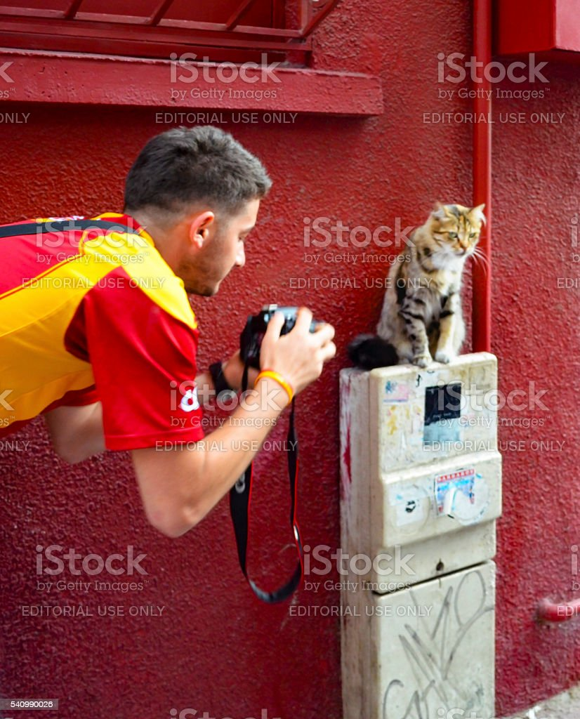 Photographers are interested in the cat model study stock photo