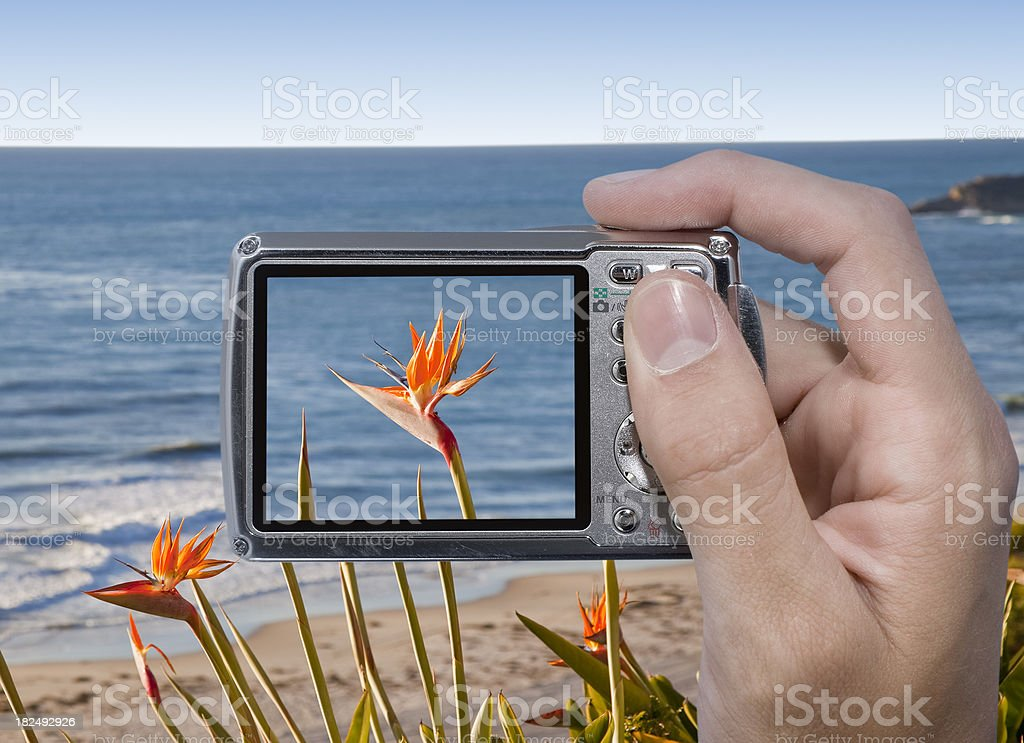 Photographing a Flower royalty-free stock photo