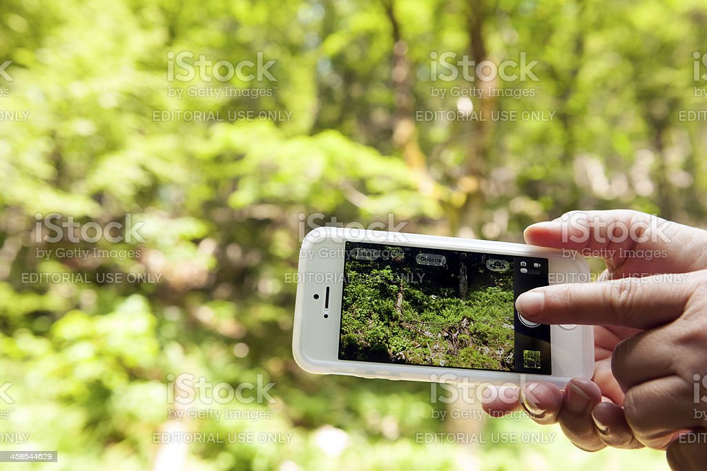 Photographing Beautiful Nature with iPhone 5 royalty-free stock photo