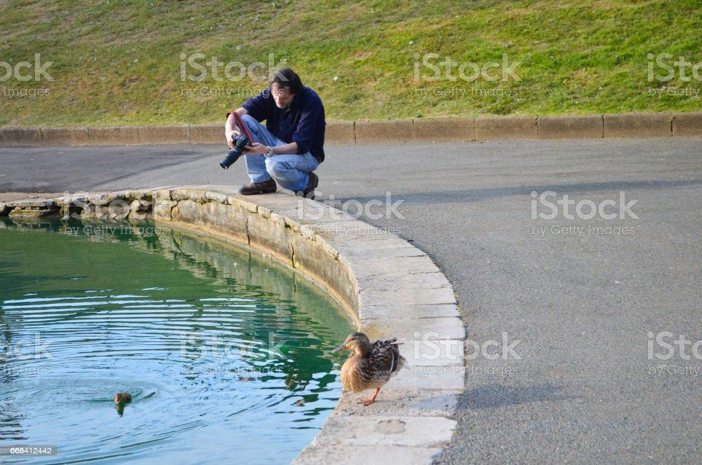 Photographing Ducks stock photo
