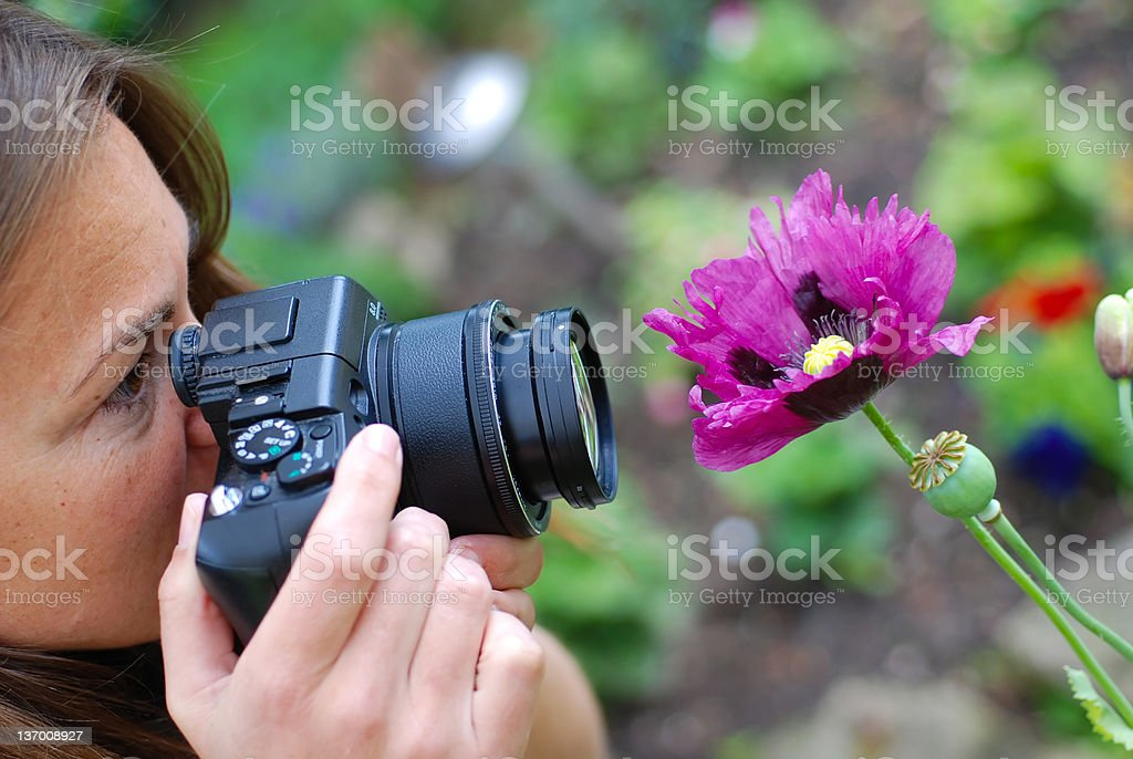 photographing purple flower royalty-free stock photo