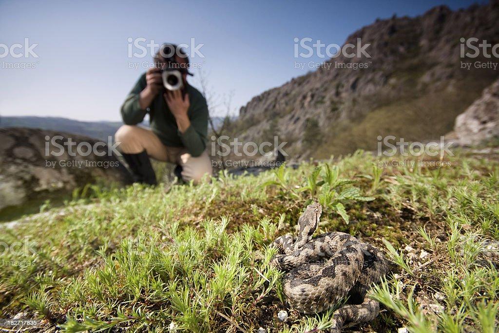 Photographing venomous snake stock photo