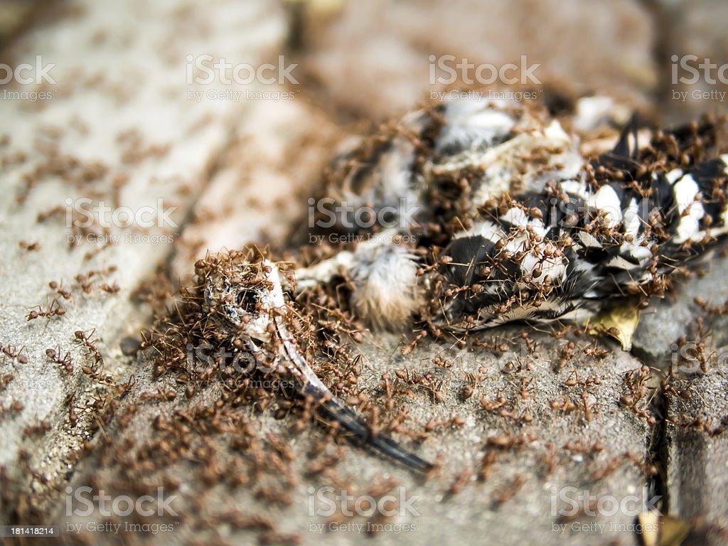 photography of a bird carcass royalty-free stock photo
