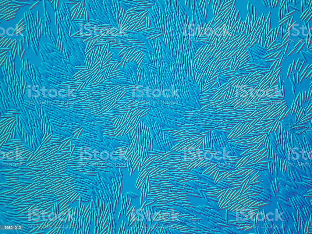 Photomicrograph of fungus spores with an overall blue coloration royalty-free stock photo