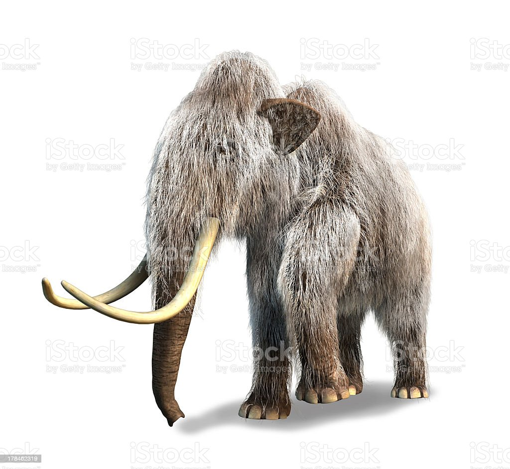 Photorealistic 3D rendering of a Mammoth. On white background. stock photo