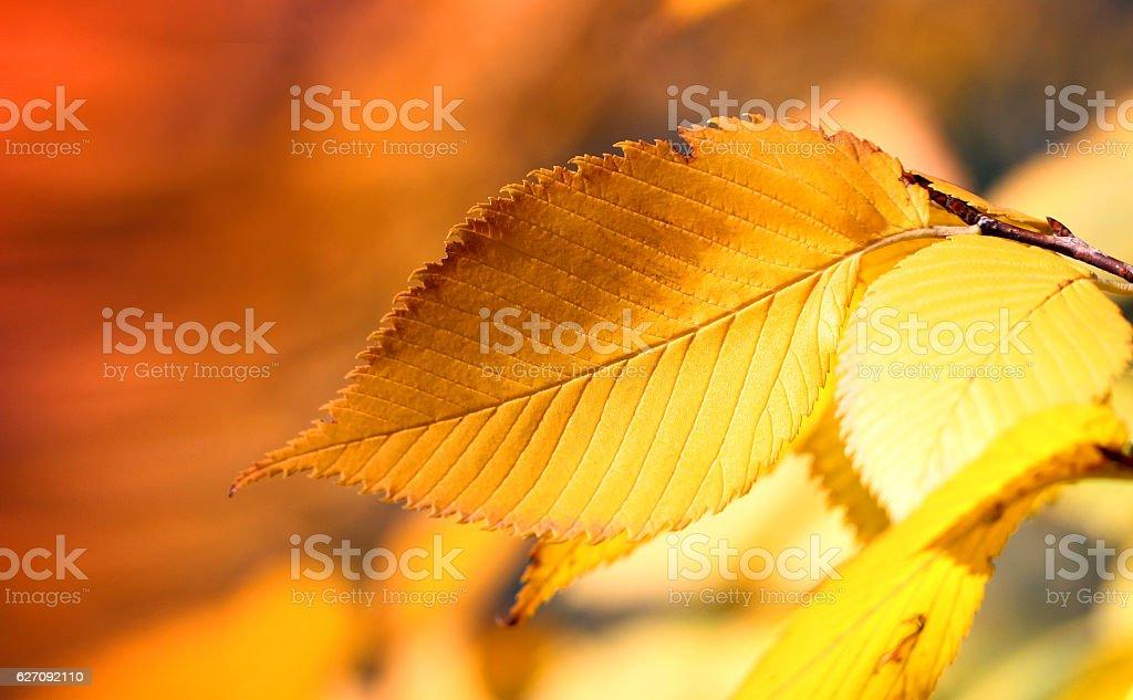 Photos bright autumn background stock photo