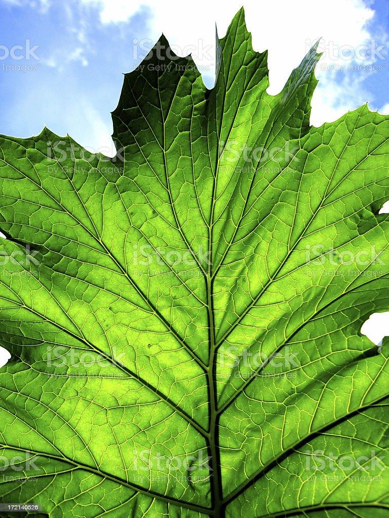 Photosynthesis royalty-free stock photo