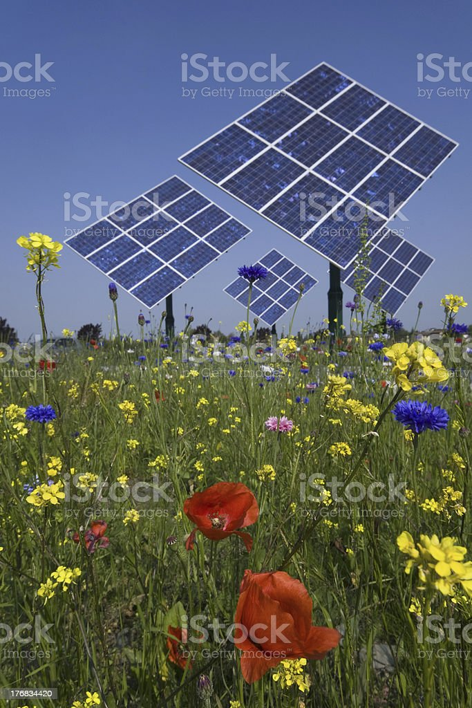 photovoltaic panels and flowers stock photo