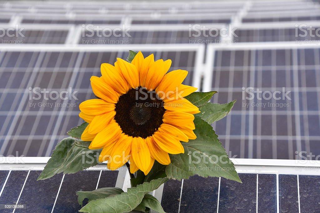 Photovoltaik stock photo