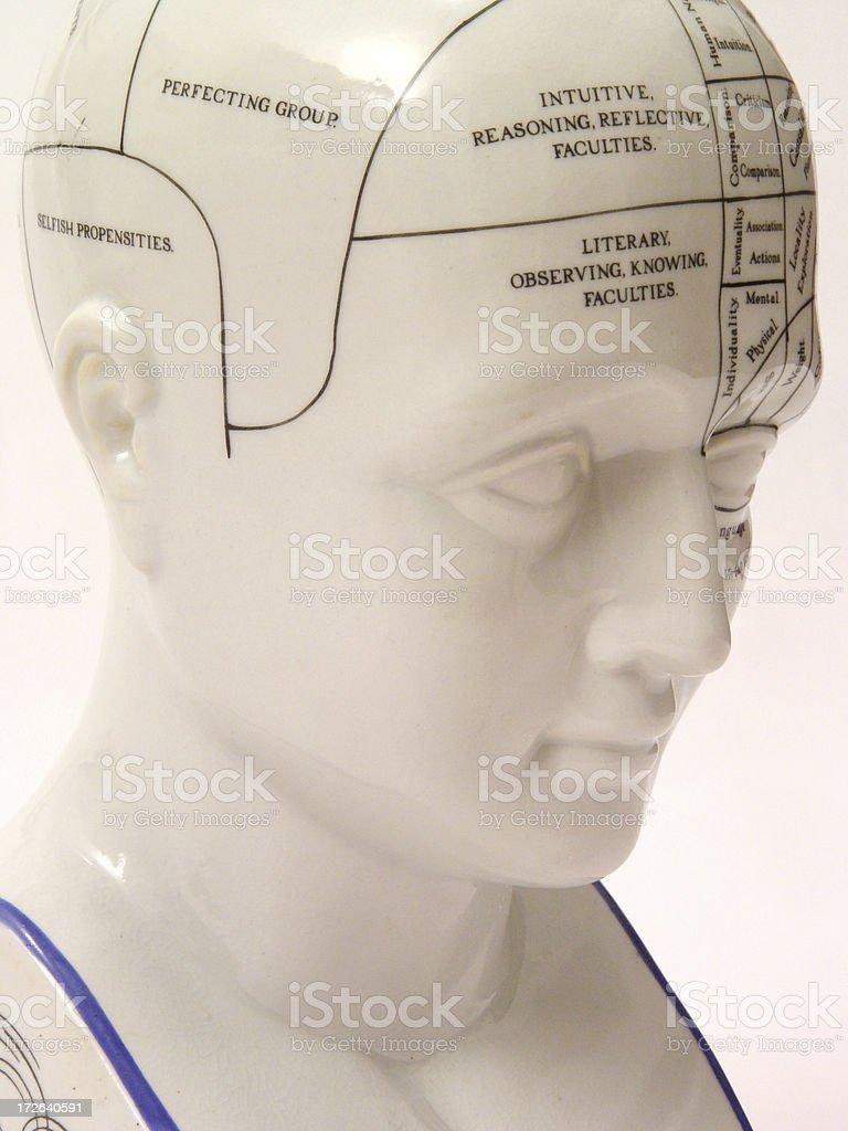Phrenology Head from right royalty-free stock photo
