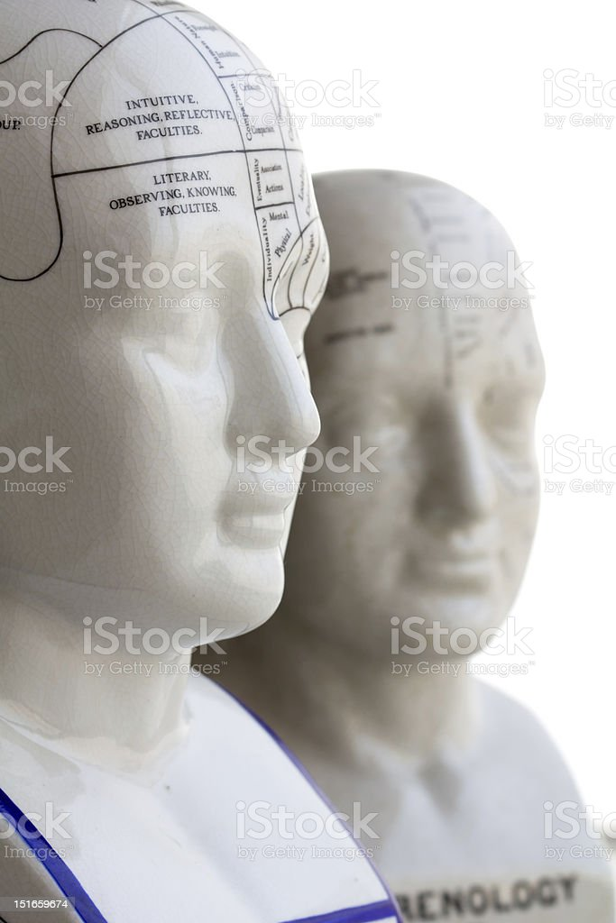 Phrenology Head royalty-free stock photo