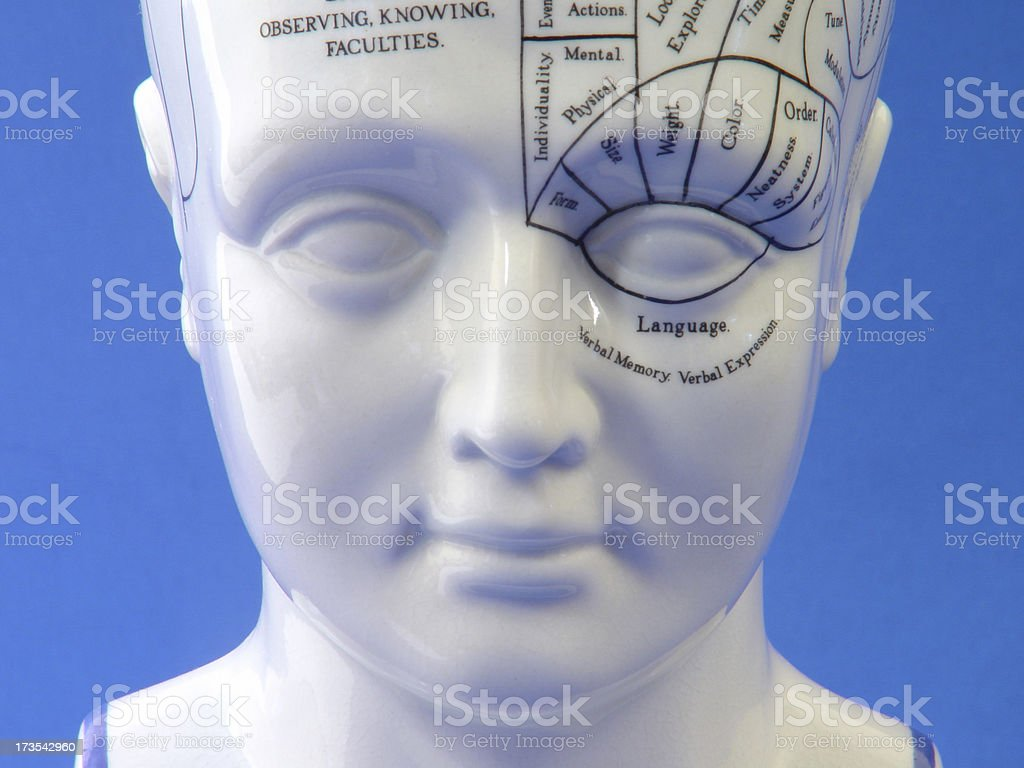 Phrenology Head royalty-free stock photo
