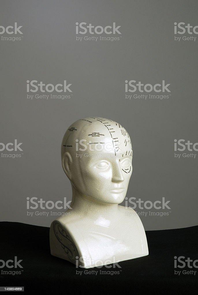 Phrenologie-Schädelmodell Porträt II Lizenzfreies stock-foto