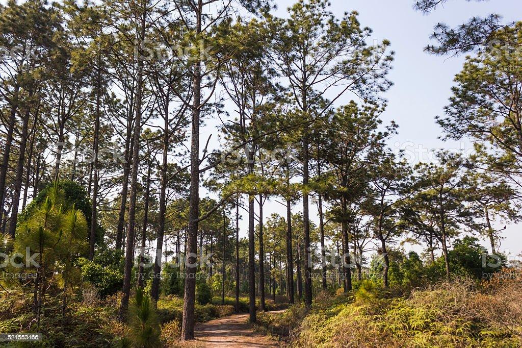 Phu Kradueng National Park in Loei Province of thailand. stock photo