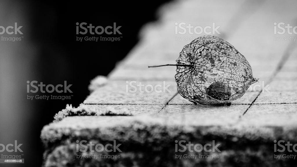 Physalis alkekengi - Amour en cage stock photo