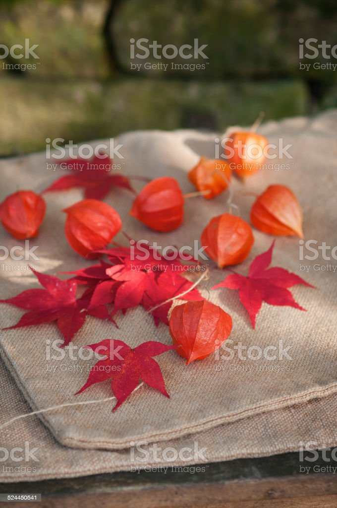 Physalis alkekengi  with red maple leaves stock photo