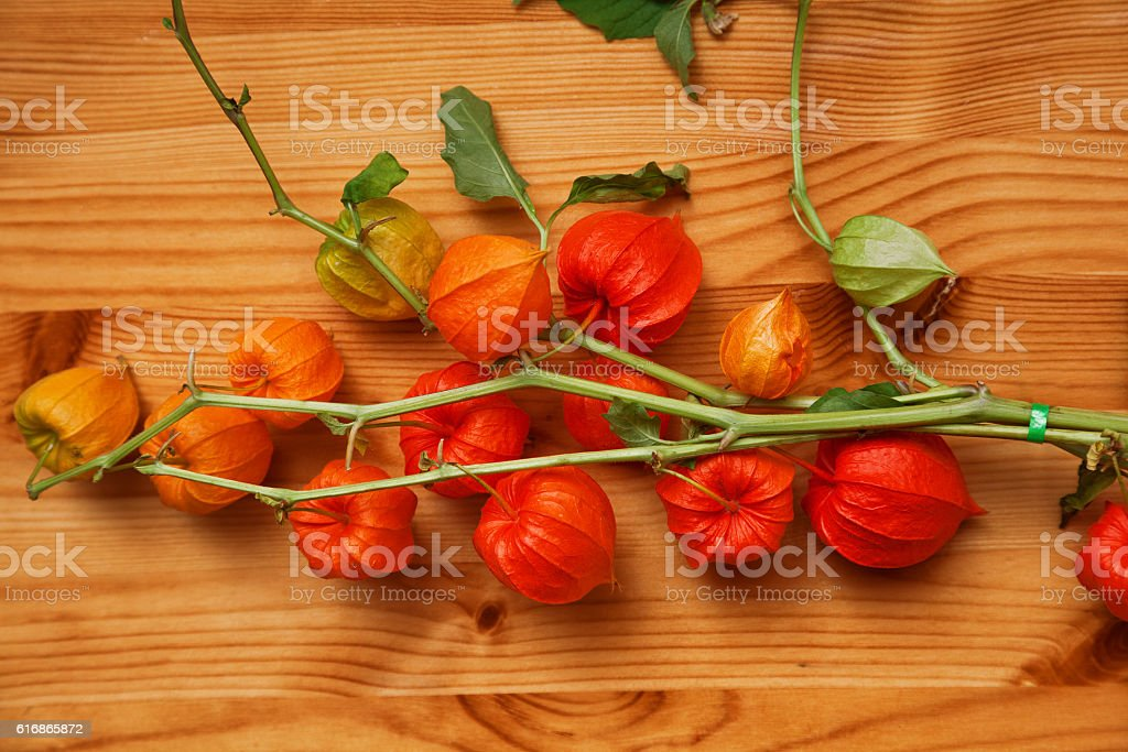 Physalis branch on a wooden surface stock photo