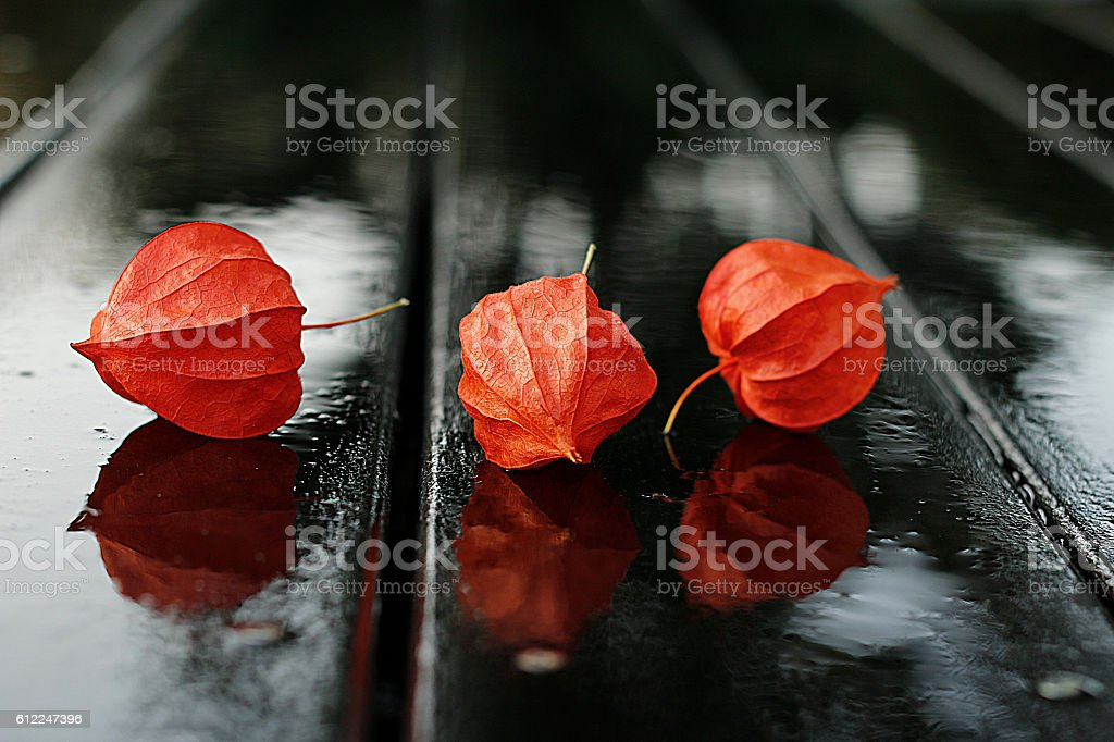Physalis close up stock photo