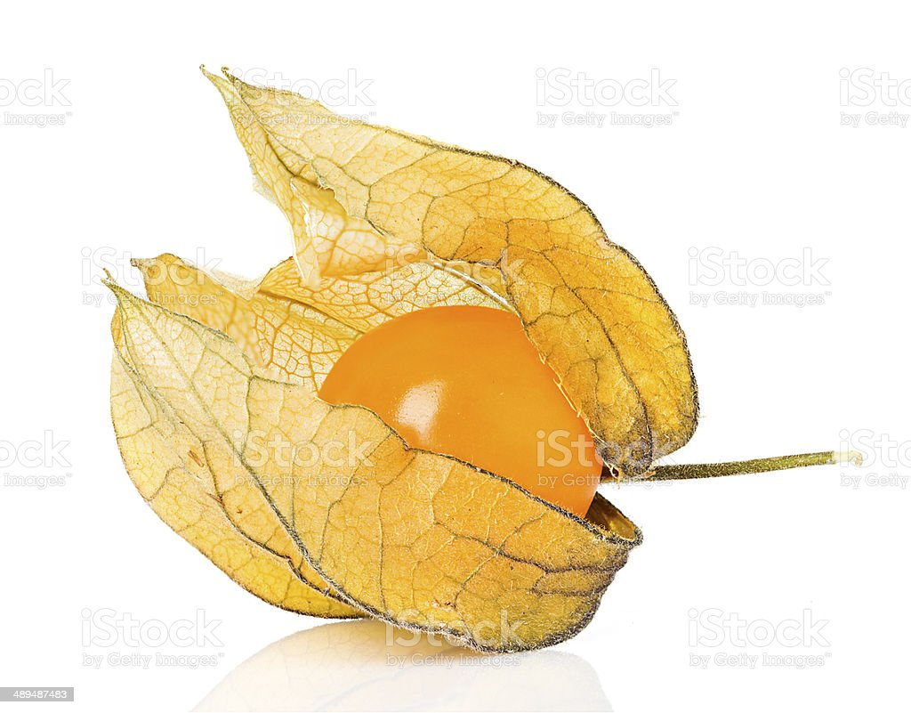 Physalis fruit isolated stock photo