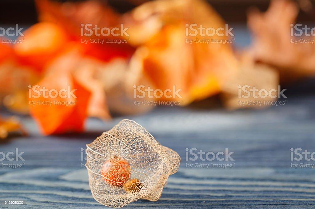 Physalis fruit on blue background stock photo