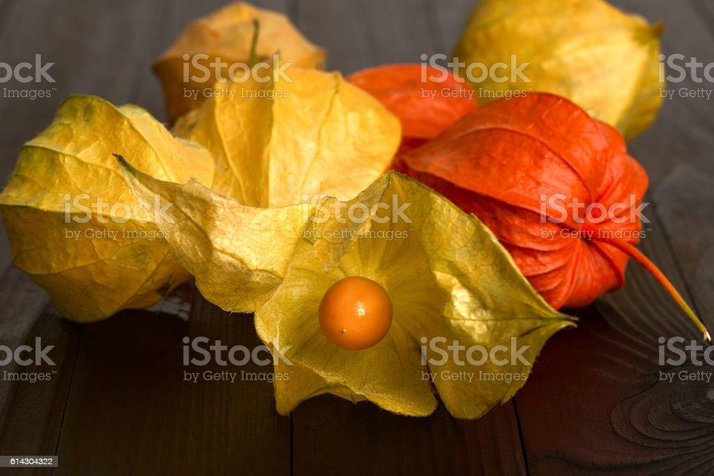 Physalis - fruit with husk stock photo