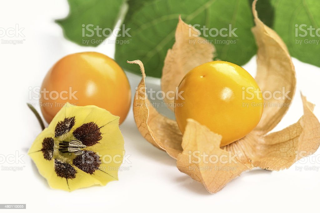 Physalis fruits and blossom stock photo