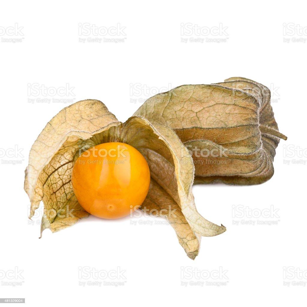 Physalis fruits isolated on white stock photo