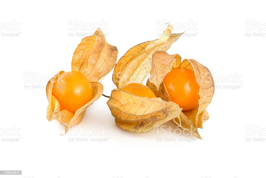 Physalis isolated royalty-free stock photo