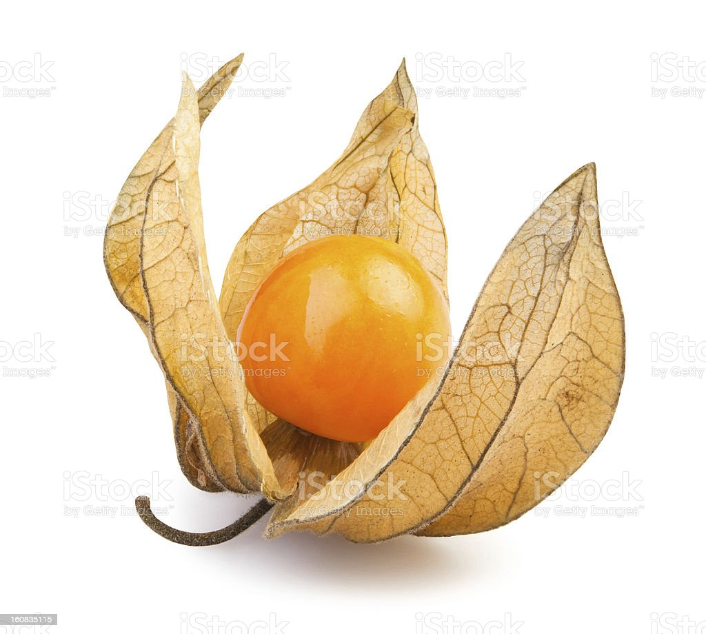 physalis one stock photo