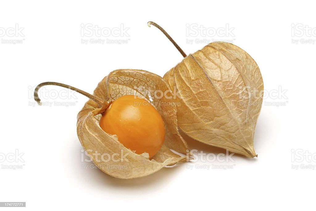 Physalis royalty-free stock photo