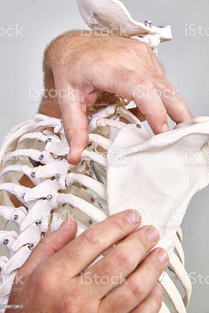 physicaltherapy on a skeleton stock photo