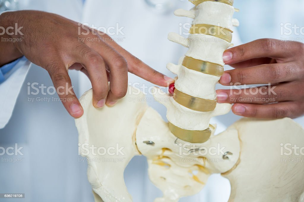 Physiotherapist pointing at spine model stock photo