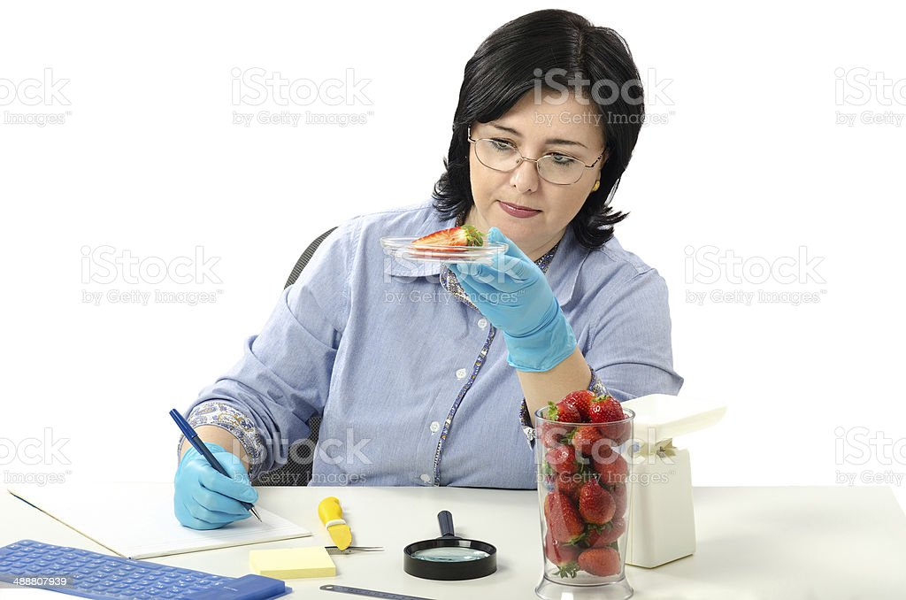 Phytosanitary engineer carefully examines strawberries royalty-free stock photo