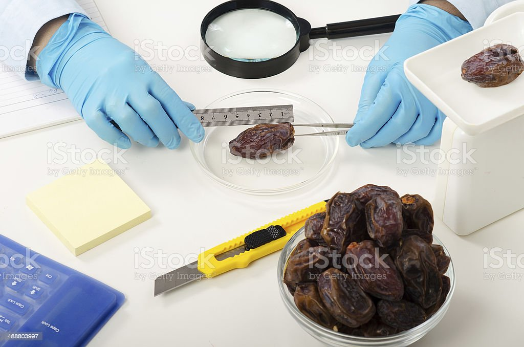 Phytosanitary engineer hands measuring a date royalty-free stock photo