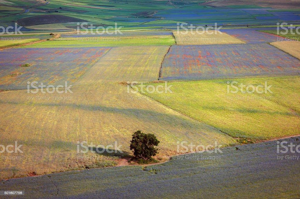 Piano Grande di Castelluccio, Village on a green hill ,Italy stock photo