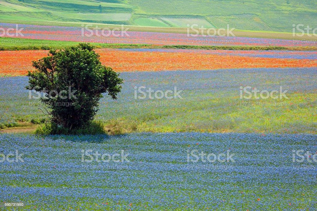 Piano Grande di Castelluccio, Village on a green hill,Italy stock photo
