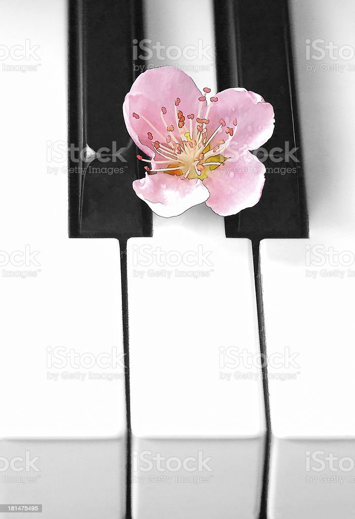 Piano keys and flower,Painting effect royalty-free stock photo