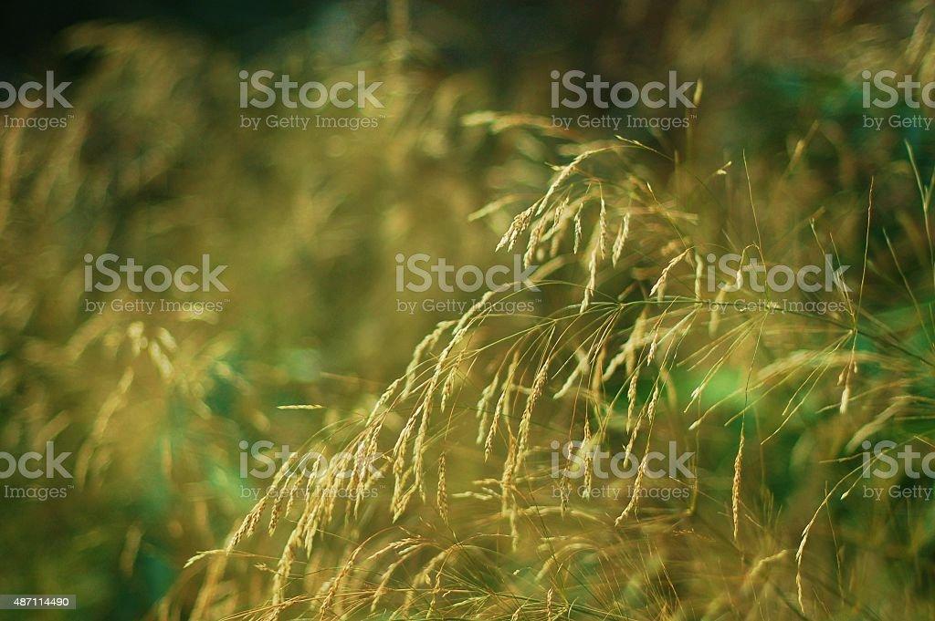 piante al vento stock photo