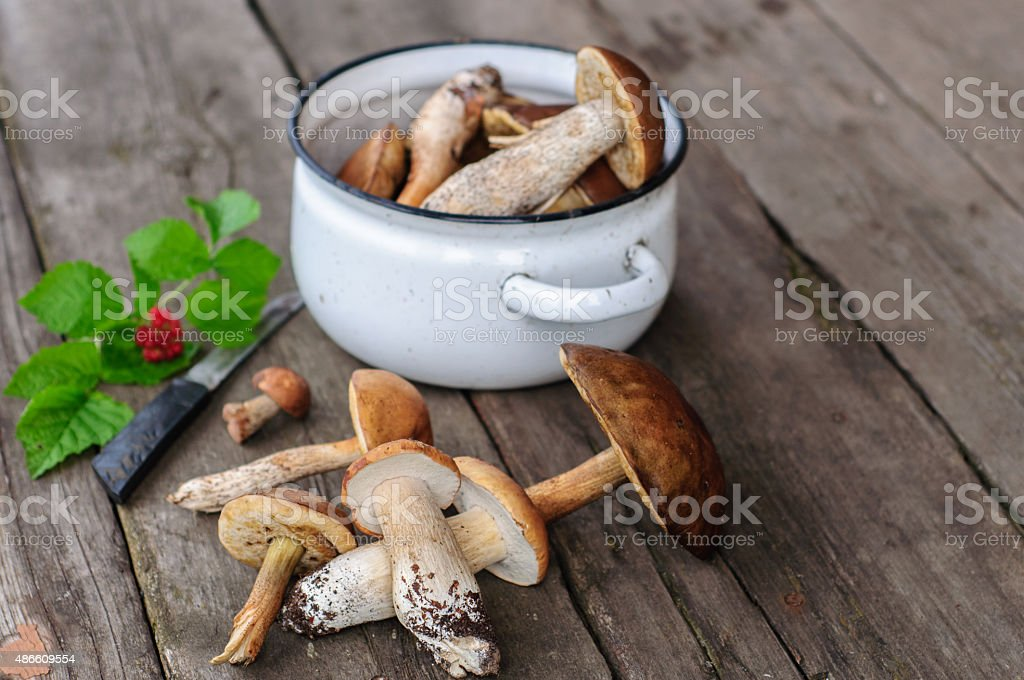 Picked edible forest mushrooms stock photo