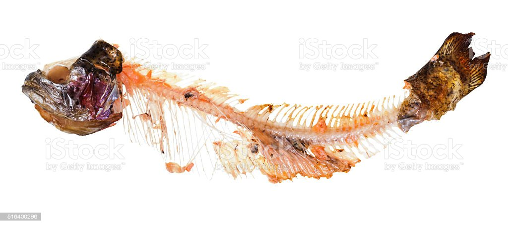 picked skeleton of trout fish isolated on white stock photo