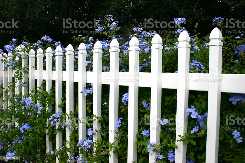 Picket Fence, Lavendar Flowers royalty-free stock photo