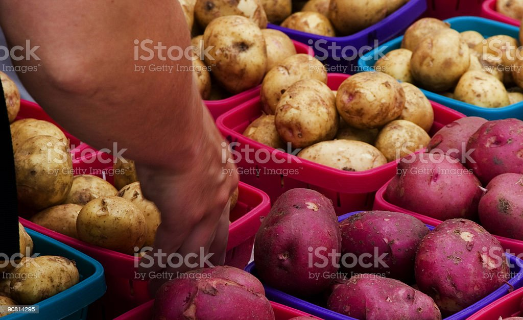 Pickin out Taters royalty-free stock photo